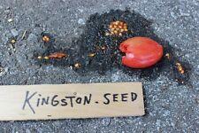 HAMBURG ROOTED PARSLEY Seeds - 50 Seeds - gourmet root veggie