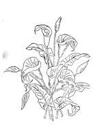 Vintage Visage iron on embroidery transfer- vintage cala lily lilies design