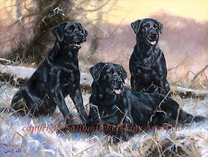 Black Labrador Retrievers, Christmas cards pack of 10. C465x John Trickett