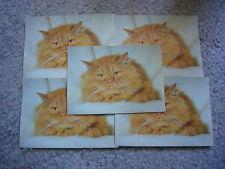 5  Postkarten mit Katzenmotiv  DDR neu + ungelaufen