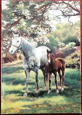 Horse and Foal. Bamforth Post Card