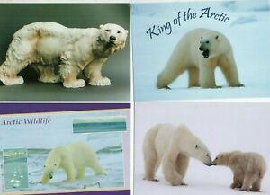 23 postcards:  POLAR BEARS all different