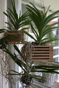 Holzkörbchen für Orchideen Vanda Eiche natur zum Hängen