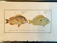 1st EDITION BLOCH OBLONG FOLIO H/C RARE FISH - JUB & PACU - #308