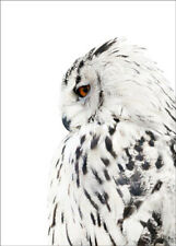 LARGE A3 SIZE QUALITY CANVAS PRINT * WINTER OWL