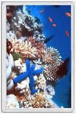 GREAT BARRIER REEF - JUMBO FRIDGE MAGNET - CORAL TROPICAL  FISH DIVING AUSTRALIA