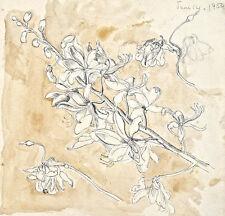 Dorothy Eaton Drawing (XXXV) Botanical