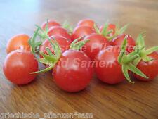 RED BERRY Tomates Grappes 10 graines toutes sortes très rare samenfest