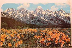 Wyoming WY Jackson Hole Grand Teton Range Postcard Old Vintage Card View Post PC