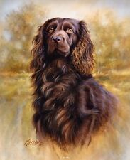 Boykin Spaniel Dog on 16 inch Square Fabric Panel. Killen Artwork. To Sew.