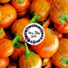 Aubergine TÜRKISCHE ORANGE10  frische Samen Exotisch schönste Sorte mehrjährig