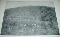 1892 Antique Print COFFEE FARM BRAZIL SOUTH AMERICA People Working Plantation