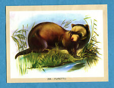 NATURAMA - Lampo 1968 - Figurina-Sticker n. 258 - FURETTO -Rec