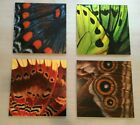 """LARGE Peter Lik Butterfly Wings (Set of 4) Elements 19"""" x 19"""" Each Squared Lik2"""