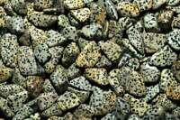 1LB Dalmatian Jasper Tumbled Gemstones Wholesale Bulk TRDSBL-16/7M4