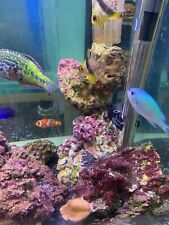 Live Rock - Marine - Saltwater - Cured - Mature -10 kilos - Much more available