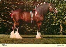 Budweiser Clydesdale Grants Farm Gravois Rd, St. Louis, MO Missouri