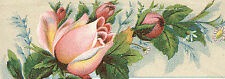 1880's DES MOINES, IOWA TRADE CARD * COLE'S CONSERVATORIES at 706 4th St. TTC500