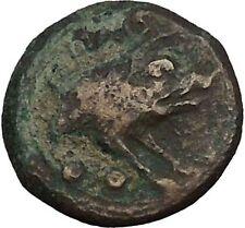 PAESTUM in LUCANIA 1stCenBC Demeter Boar Authentic Ancient Greek Coin i52378