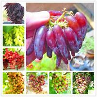 50 seeds/pack Very Rare finger grape Advanced organic fruit seed sweet & Delicio