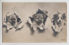 POSTCARD - dogs, three cute puppies, heads peeping out, real photo posted 1907