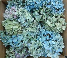 New listing 40+ Box Dried Hydrangea Flowers Pieces Light Blue Green Cream Purple Diy Crafts