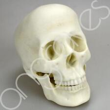 White Marble Effect Skull Ornament Decoration Home Decor Death Head Bones