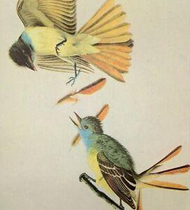 John James Audubon GREAT CRESTED FLYCATCHER Vtg Original Book Plate Art Print