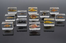 Sea Animal 12Pcs Fresh Water Fish Specimen In Fish Collection Set Lucite Block
