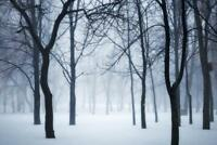 Winter forest in fog Poster 24x36 inch