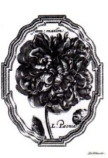 New LA BLANCHE Silicone Rubber Stamp XL Peony flower in frame free USA ship