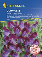 Wicken Duftwicken * Ramia - zweifarbig * MHD 01/23 Kiepenkerl 3661