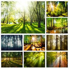 WALD LANDSCHAFT Vlies Fototapete Sonne Natur grün Wand Tapete xxl Wohnzimmer