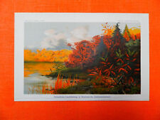 Herbst Laubfärbung Nordamerika (Indianersommer) Indian Summer Lithographie 1900