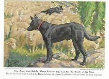 Australian Kelpie - Vintage Color Dog Art Print - Matted
