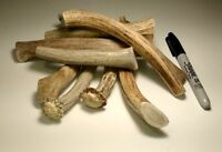 One Pound Organic Whole Deer Or Elk Antler Dog Chews - S, M, L, XL, XXL
