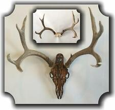 HEADCASE Deer Antler Hanging Mount Display Kit Hand Made Made in USA