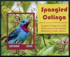 Guyana 2019 MNH Spangled Cotinga 1v S/S Cotingas Birds Stamps