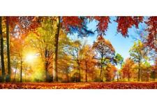 Colorful Forest Panorama in Autumn Photo Art Print Poster 24x36 inch