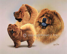 Chow Chow Multistudy Giclee Print by Robert J. May