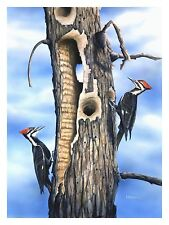 "1 ""Crested Pair"" Pileated Woodpecker 24x28.5 Paper Print by Robert Metropulos"