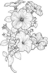 Flower - Flowers - Spray #33 Unmounted Clear Stamp Approx 40x60mm
