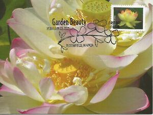 Pink American Lotus  Flower Garden Beauty USA FDC Maximum Card Scott #5567