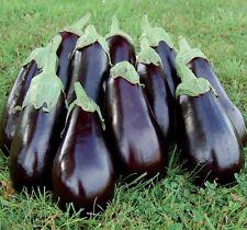 Eggplant BLACK BEAUTY 75 Seeds Organic Heirloom