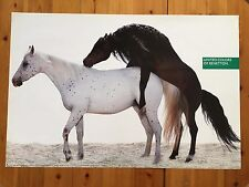 UNITED COLORS OF BENETTON, BY OLIVIERO TOSCANI RARE  AUTHENTIC 1990'S POSTER