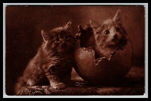THE CUTE KITTY FLUFFY KITTEN IN EGGSHELL C.E. BULLARD POSTCARD 900