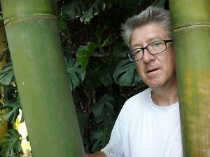 verrückt: dieser winterharte Bambus wächst bis zu 50 cm am Tag !
