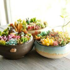 Succulent Combination / Arrangement Clay Pots Succulent Box Garden Landscapes
