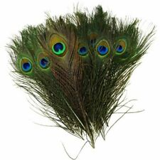 50pcs Natural Peacock Tail Feathers for DIY Fashion Accessory Decor