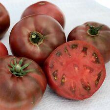 Carbon tomato seeds x 20, large dark fruits